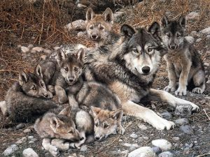 Семья волков - The Family of Wolves (goo.gl/NAxhhJ)